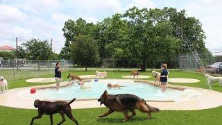 Meadowlake Pet Resort & Training Center- Daycare