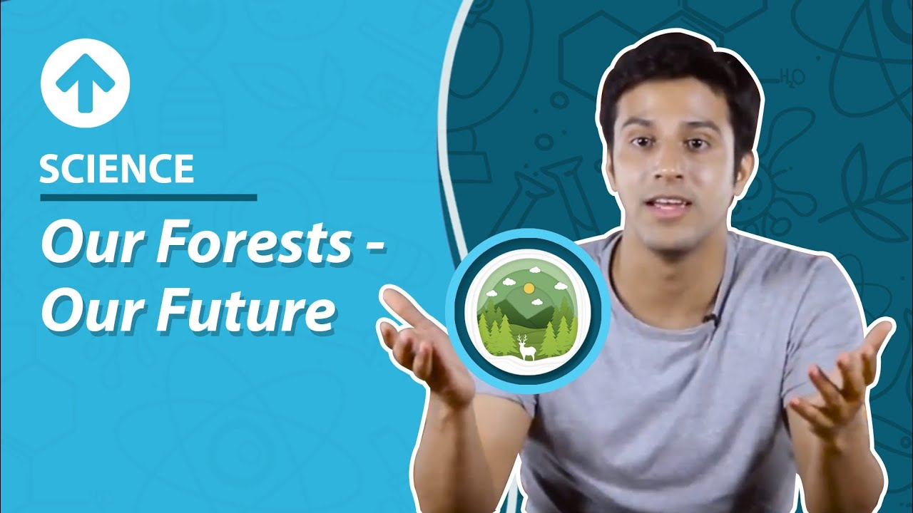 Forest Conservation: Importance, Ways to Conserve, Concepts, Examples
