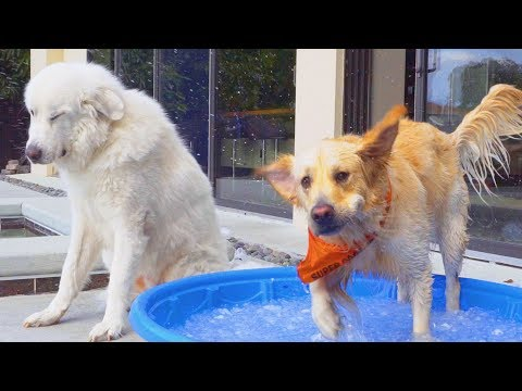 BACKYARD WATER TOYS (Super Cooper Sunday #101)