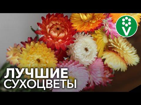 Эти цветы НИКОГДА не завянут! ЛУЧШИЕ СУХОЦВЕТЫ для зимних букетов