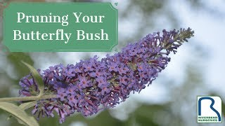 How & When to Prune Your Butterfly Bush