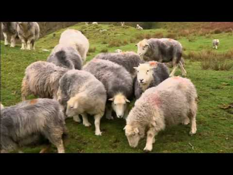 Brexit fallout: opportunity or threat for British farmers?