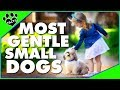 7 Most Gentle Small Dog Breeds - Animal Facts