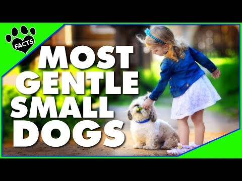 Gentle Small Dog Breeds