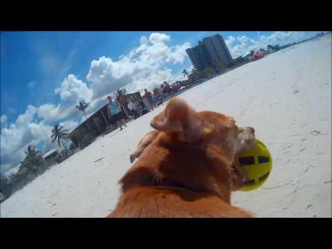 GoPro Dog Backpack Fort Myers Beach, FL