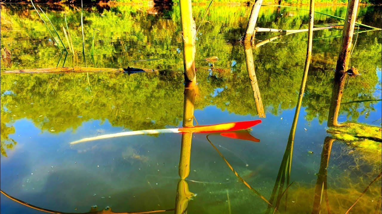 Рыбалка на поплавок 2020 ДОБАВИЛ РИС В КАШУ И КАК ВСЕГДА С УЛОВОМ