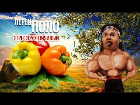 Болгарский перец Поло. Такого перца вы еще не выращивали.