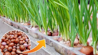 Growing Onions Without Soil, G๐od Tips Worth Learning | Cheap & Easy Ways