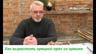 видео Как вырастить грецкий орех