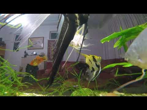 Tropical Fish Tank. Room Tour With Fish // Тропический  пресноводный аквариум. Комната с рыбой