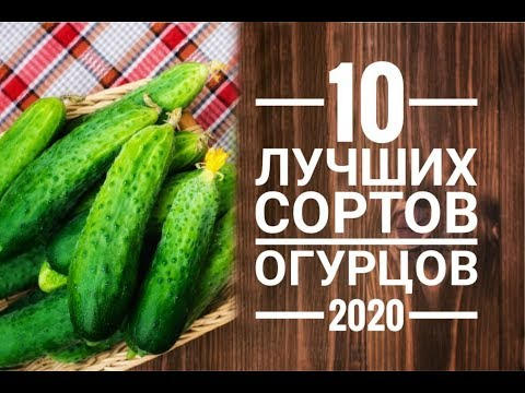 10 Лучших сортов огурцов 2020 г.