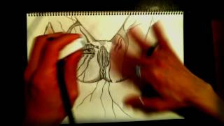 Vagina (Speed Drawing / Time Lapse / Psychedelic Drawing Sketch / Trippy Drawing Sketch)