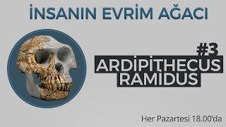 Ardipithecus ramidus | İnsanın Evrim Ağacı #3