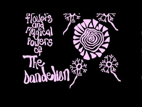 The Dandelion - In the Shadow of Light