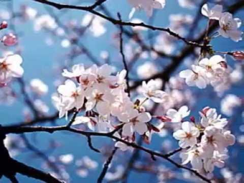 Shintaro... Sakura, Fujiyama, Tokyo, Sayonara feat Ria Resty Fauzy