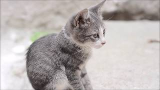 Cute Kittens and Cute Cats - Adorable Cats