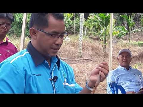 Kursus Cantuman Tunas Durian