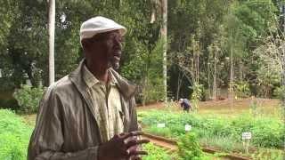 Agricultura Urbana en Cuba 3/3