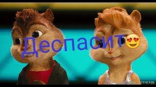 Клип Деспасито на Русском ( бурундуки )