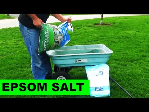 Using Milorganite to Apply Epsom Salt to your lawn