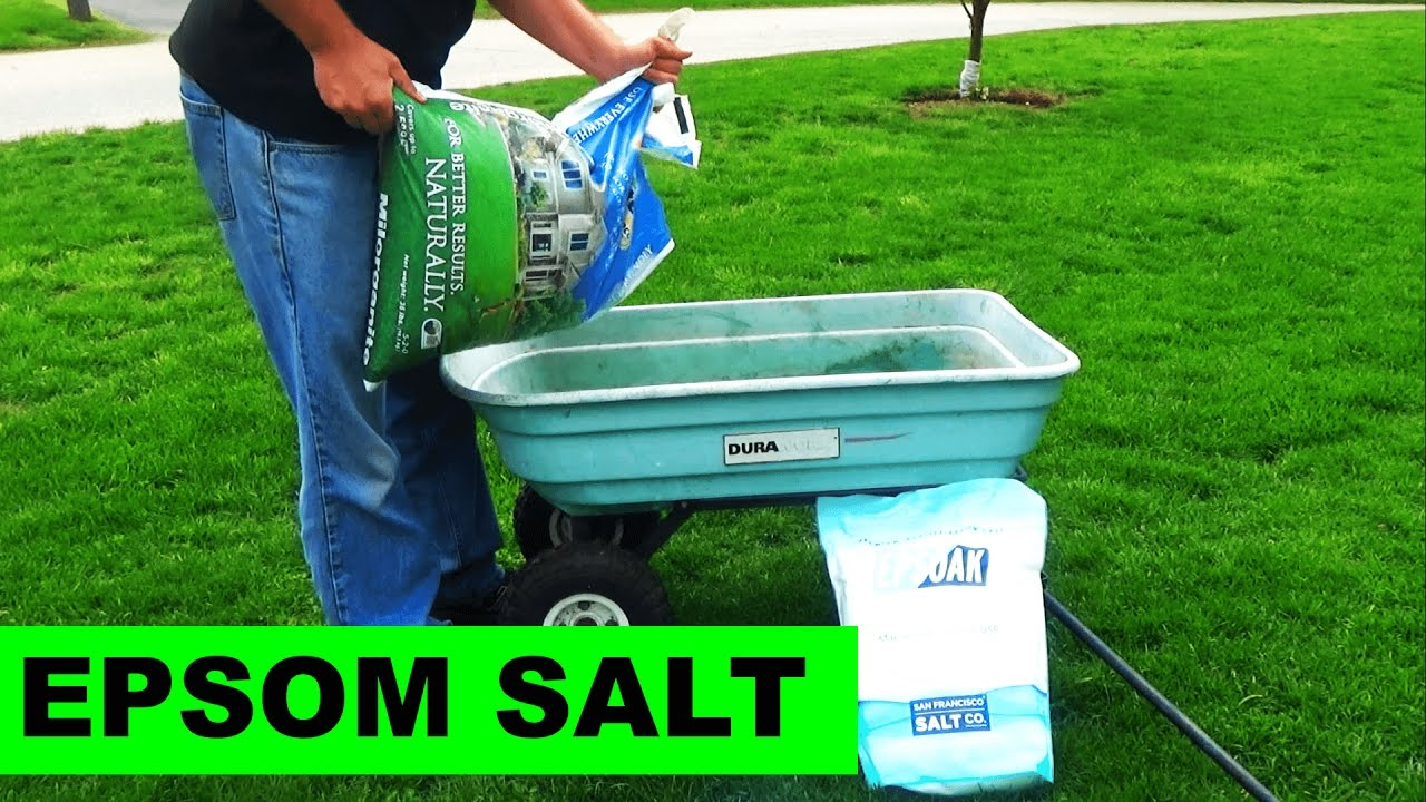 Using Milorganite To Apply Epsom Salt To Your Lawn Youtube
