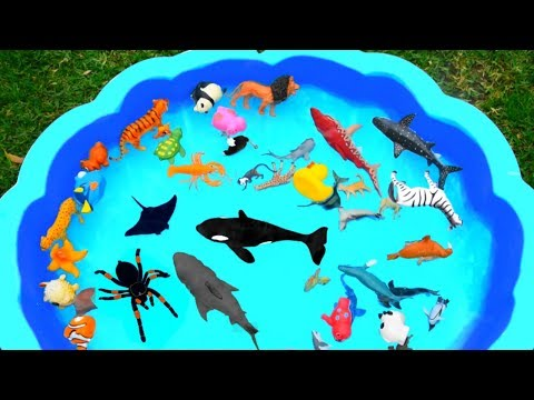 Learn Colors with Wild Animals in Blue Swimming Pool For Kids