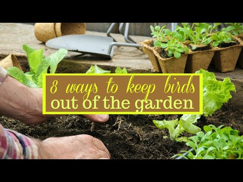 8 Ways To Keep Birds Out Of The Garden
