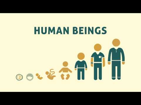 When Does a Human Life Begin?