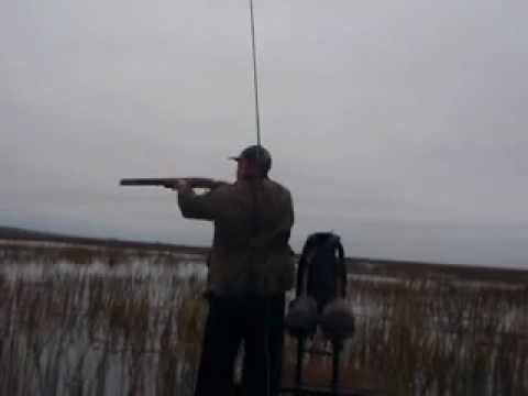 Marsh Hen Flood Tide - With Joe Guide Outfitters
