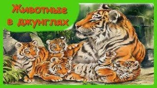 ЖИВОТНЫЕ В ДЖУНГЛЯХ 🐼Мамы и малыши/Учим с детьми названия диких животных