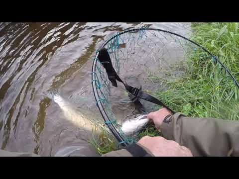 Mike Sowerby's Mill Pool Salmon Canonbie Esk