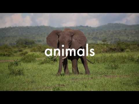 We move the world to protect animals | World Animal Protection