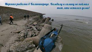 Морская рыбалка в Калининграде Камбалу и салаку не поймал тот кто остался сидеть дома