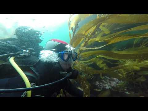 Diving in Strait Magellan (Buceo en Estrecho de Magallanes)
