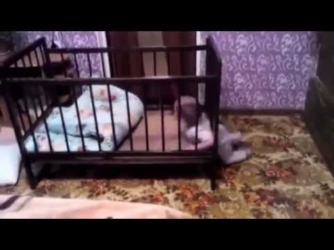 the great escape of one very smart baby