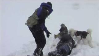 Van Orden down - poodle rescue