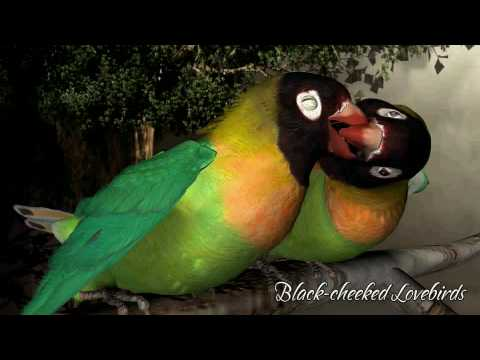 Songbird Remix Demo