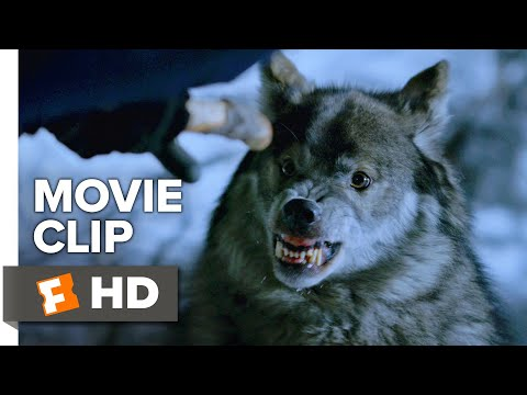 Daughter of the Wolf Movie Clip - Wolf Attack (2019) | Movieclips Indie