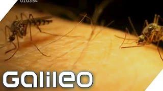 Tipps gegen Stechmücken?   Galileo   ProSieben