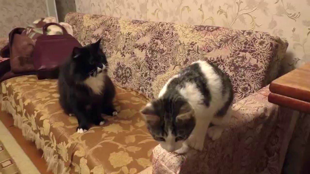 Котенок Знакомство