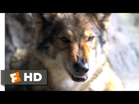 Alpha (2018) - A Peace Offering Scene (4/10) | Movieclips
