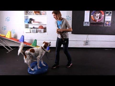 how-to-teach-your-dog-tricks-w/o-treats-|-dog-tricks