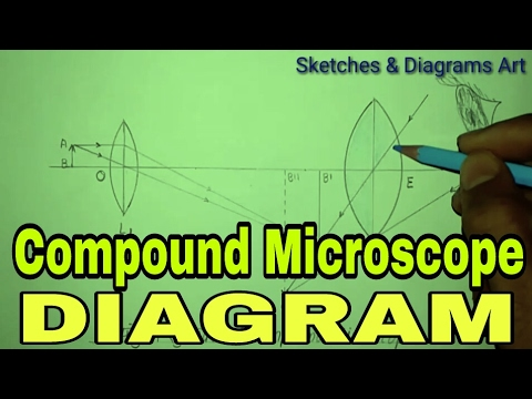 Microscope Compound Microscope Optical Diagram Youtube