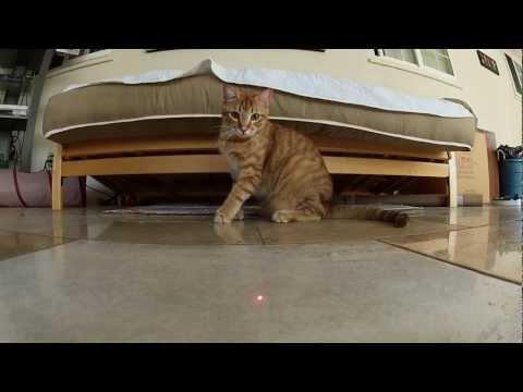 GoPro: Cats vs. Laser