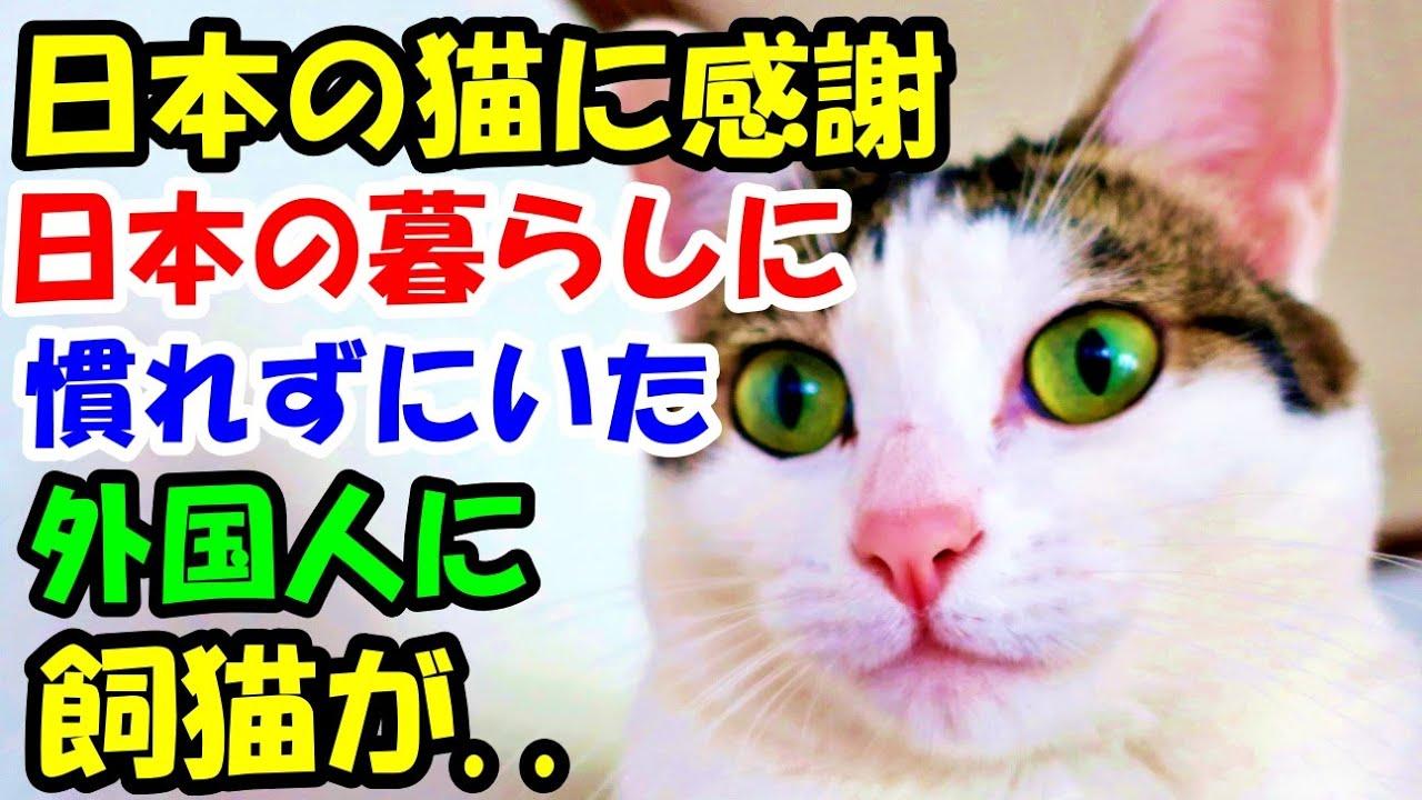 日本の猫に感謝 日本の暮らしに慣れずにいた外国人に飼猫が..【猫の不思議な話】【朗読】