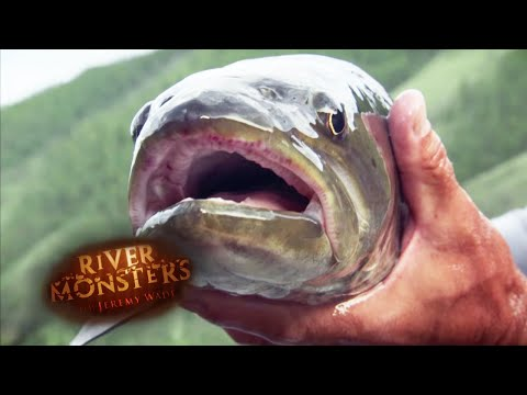 Catching A Taimen - River Monsters