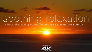 soothing relaxation 1hr of 4k nature scenes music with harp flute strings for relaxation