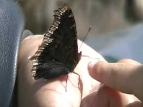 Butterfly Pavilion | Natural History Museum of Los Angeles