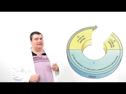 Interfase - Divisão Celular - Ciclo Celular - BIOLOGIA