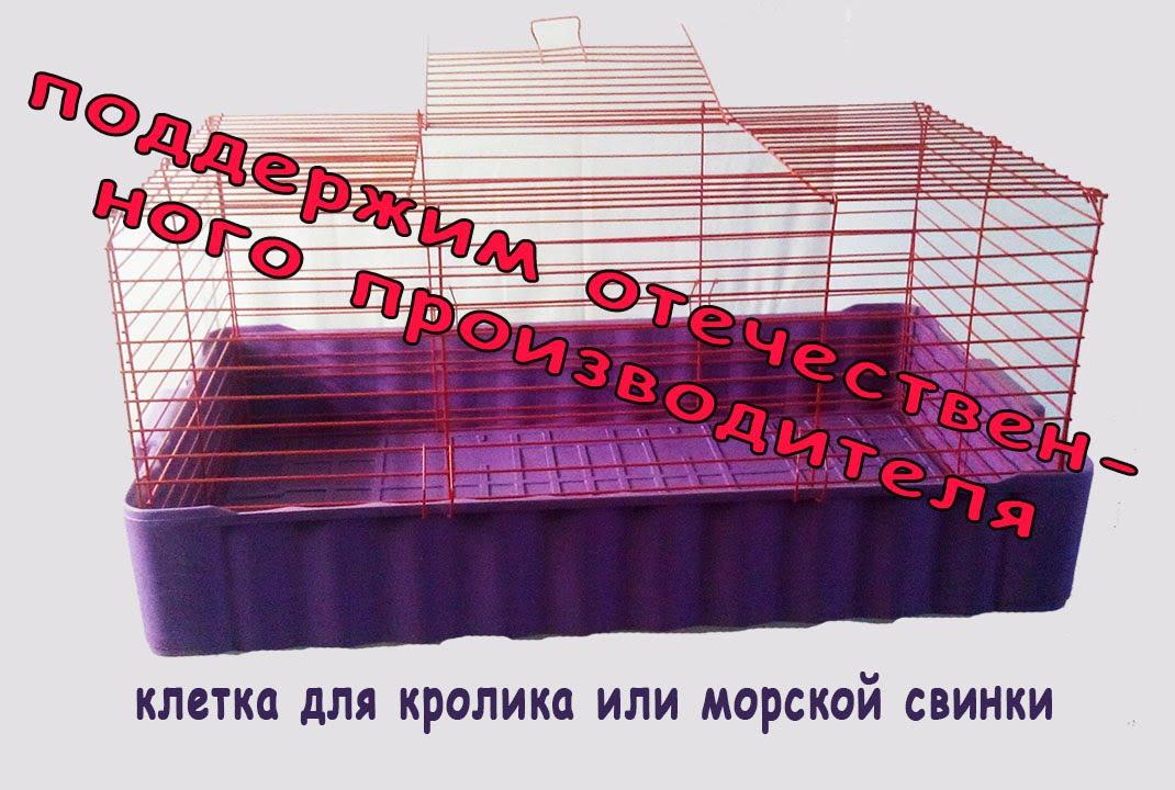 Мы стояли у истоков профессионального разведения морских свинок в. Если мы пропустим в результатах поиска клетки для морских свинок на авито,. Для свинки за 500 или даже за 1000 рублей может купить ну практически.